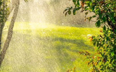 What You May Not Know About Yard Flooding